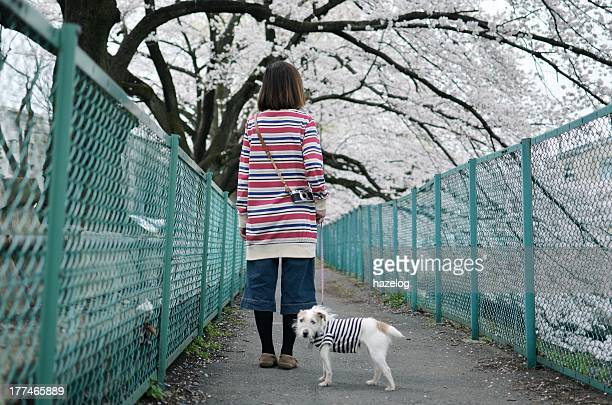 Woman and dog walking on path with sakura