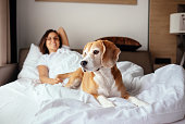 Woman and her beagle dog meet morning in bed