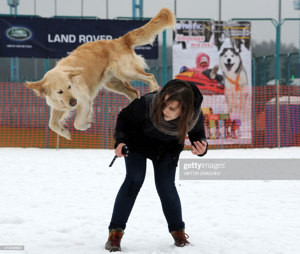 A woman and her dog perform during international dog sled race 'Zavirukha' (Snow Storm) in the Belarus capital Minsk on February 22, 2014. About 140 athletes from Belarus, Russia, Latvia and Lithuania take part in competitions. AFP PHOTO / VIKTOR DRACHEV