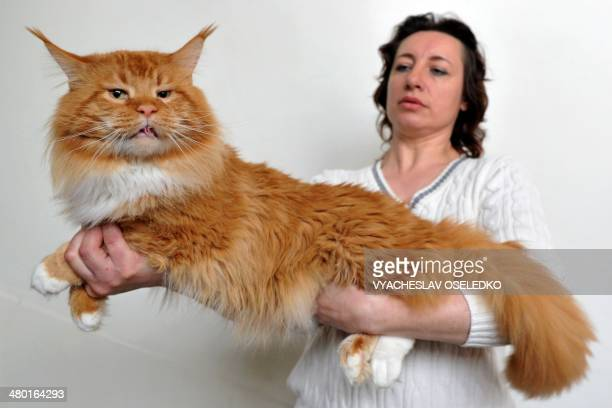 A woman and her Maine Coon cat pose during a cat exhibition in Bishkek on March 23 2013 Cat lovers from Kyrgyzstan Kazakhstan and Uzbekistan took...