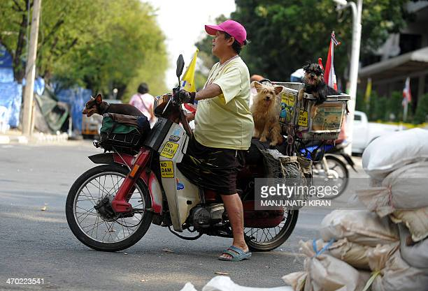 A woman and her pets on a motorcycle turn back after waiting for a traffic block to clear near Ratchadamnoen Junction in Bangkok on February 19 2014...