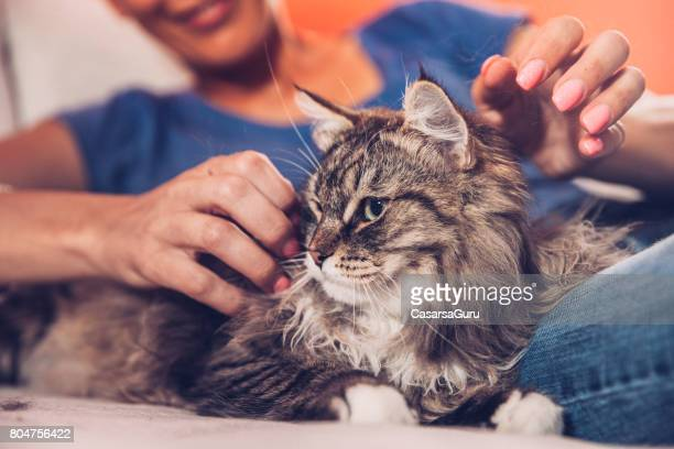Woman And Her Siberian Cat Relaxing On Sofa