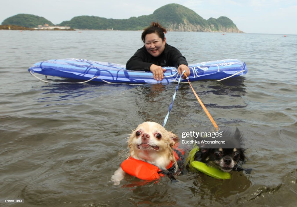 A woman and her two dogs named Yoru (R) and Hinaka bath in the water at Takeno Beach on August 4, 2013 in Toyooka, Japan. This beach is open for dogs and their owners every summer between the months of June and September. .