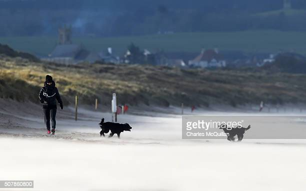 A woman and her two working cocker spaniels enjoy some sunshine as Storm Henry arrives at Portstewart strand on February 1 2016 in Portrush Northern...