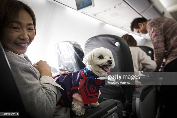 A woman and his dog are seen in a plane in Chiba Japan on January 27 2017 Japan Airlines 'wan wan jet tour' allows owners and their dogs to travel...