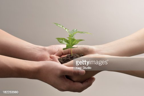Woman and man hands holds small green plant seedli : Stock Photo