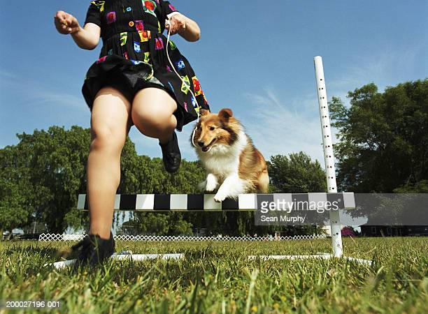Woman and Shetland sheep dog jumping over obstacle at dog show