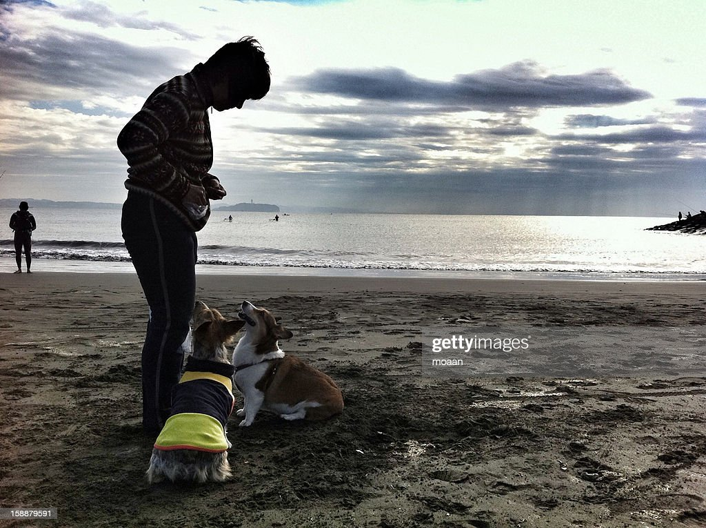A Woman and the Dogs on the Beach : Stock Photo