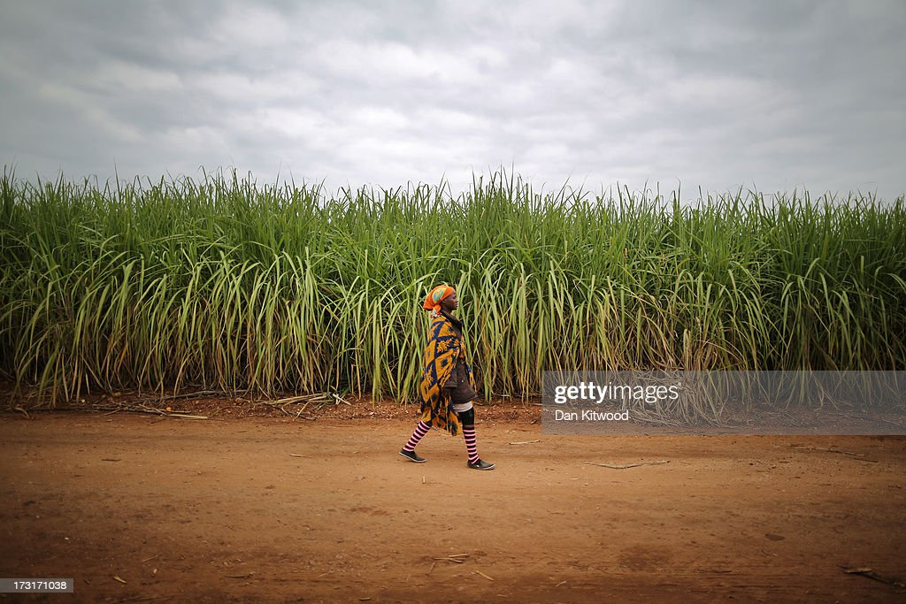 A woman arrives to work in a sugarcane field near the Kruger National Park on July 8, 2013 in Komatiepoort, South Africa. South Africa is the world's tenth largest producer of sugarcane with growers annually producing an average of 19.9 million tons of sugarcane per year. The participation of black farmers working on sugarcane production is constantly increasing through the development and empowerment of previously disadvantaged people within their communities.