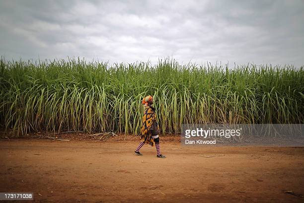 A woman arrives to work in a sugarcane field near the Kruger National Park on July 8 2013 in Komatiepoort South Africa South Africa is the world's...