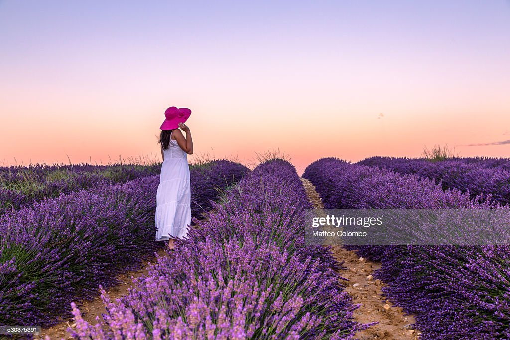 Woman at sunrise in a lavender field, Provence