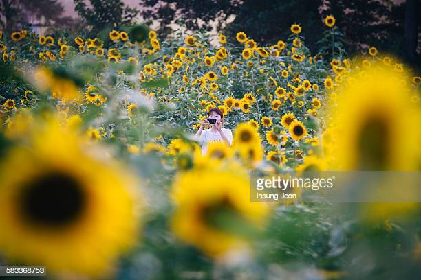 Woman capturing the sunflower with smartphone
