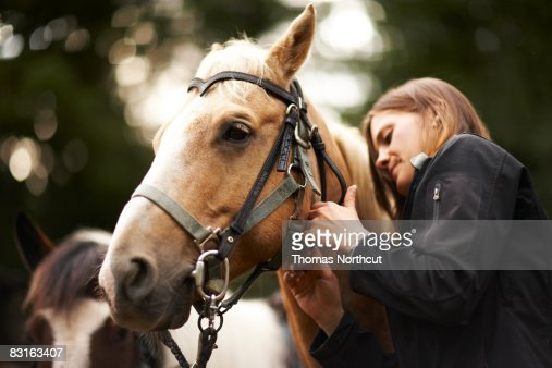 Woman caring for horse. : Stock Photo