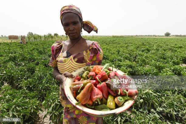 A woman carries a bowl of peppers harvested from Food and Agriculture Organisation supported farms at Jere community 11 km from Maiduguri in Borno...