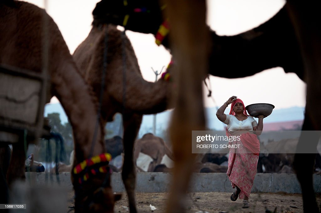 A woman carries a bowl while picking up camel dung at dawn at the camel fair grounds in the outskirts of the small town of Pushkar on November 22, 2012. Thousands of livestock traders from the region come to the traditional camel fair where livestock but mainly camels are traded. The annual five-day camel and livestock fair is one of the world's largest camel fairs. AFP PHOTO/Roberto Schmidt