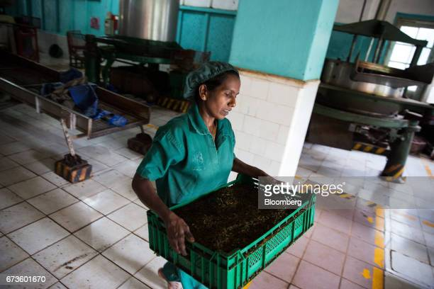 A woman carries a crate of partially processed tea leaves at the factory of the Geragama Tea Estate operated by Pussellawa Plantations Ltd in...