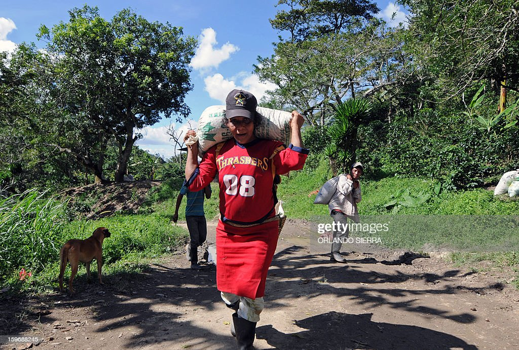 A woman carries a sack of coffee beans during harvest in the department El Paraiso, 110 kms east of Tegucigalpa, on Januray 17, 2013. Central America, one of main producers of the best Arabica Coffee, is analyzing to take measures to combat the Roya (Puccinia graminis) blight already threatening more than one third of the bean crop, one of the region's major export items. AFP PHOTO/Orlando SIERRA