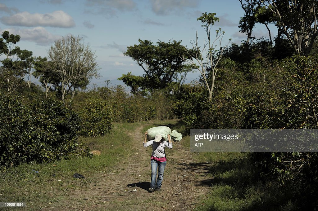 A woman carries a sack of coffee beans in Santa Tecla, 30 kms west from San Salvador, on January 17, 2013. Central America, one of main producers of the best Arabica Coffee, is analyzing to take measures to combat the Roya (Puccinia graminis) blight already threatening more than one third of the grain crop, one of the region's major export items. AFP PHOTO/ Jose CABEZAS