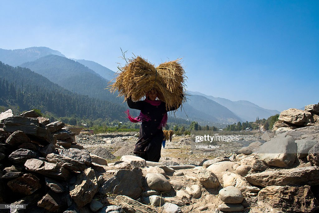 A woman carries dried grass on her head for cattle on October 15, 2012 in Sonamarg ,89km (55 miles) east of Srinagar, the summer capital of Indian administered Kashmir, India. Sonamarg, or 'Golden Meadow' is a popular tourist resort northeast of Srinagar, the summer capital of Indian administered Kashmir. Besides pine forests, gushing streams and snow-covered mountains, Thajiwas Glacier is a major attraction for tourists. Kashmir has been a contested land between nuclear neighbors India and Pakistan since 1947, the year both the countries attained freedom from the British rule.