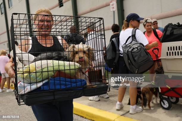 A woman carries her dog as people arrive at a shelter at Alico Arena where thousands of Floridians are hoping to ride out Hurricane Irma on September...