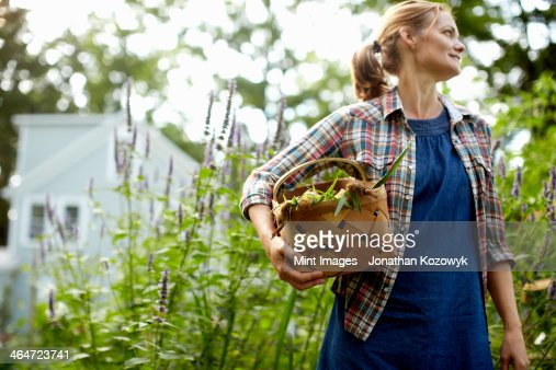 A woman carrying a full basket of fresh picked corn on the cob,and vegetables from the garden.