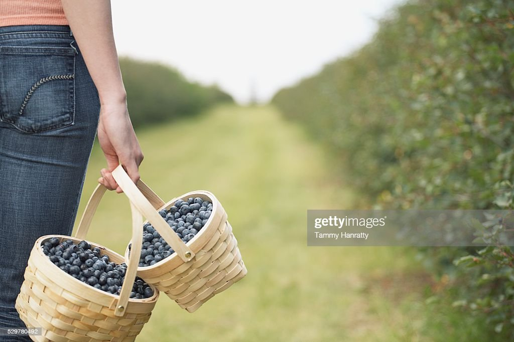 Woman carrying baskets of blueberries : Stock Photo