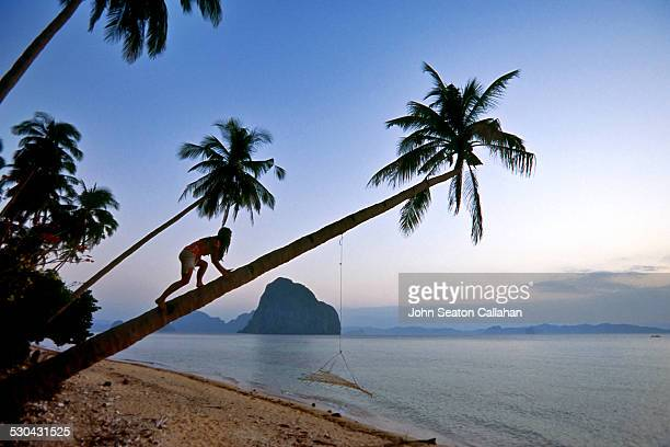 Woman climbing coconut tree