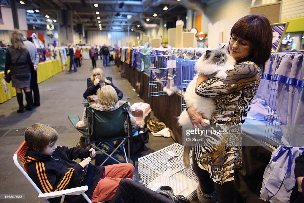A woman cuddles her cat prior to judging at the Governing Council of the Cat Fancy's 'Supreme Championship Cat Show' held in the NEC on November 24, 2012 in Birmingham, England. The one-day Supreme Cat Show is one of the largest cat fancy competitions in Europe with over one thousand cats being exhibited. Exhibitors aim to have their cat named as the show's 'Supreme Exhibit' from the winners of the individual categories of: Persian, Semi-Longhair, British, Foreign, Burmese, Oriental, Siamese.