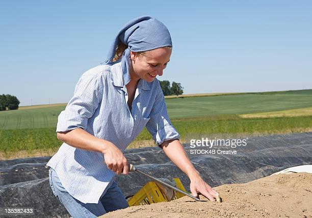 Woman cutting asparagus in field