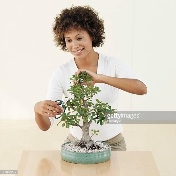 Woman cutting bonsai tree, studio shot