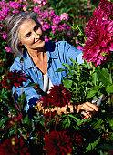 Woman Cutting Chrysanthemums