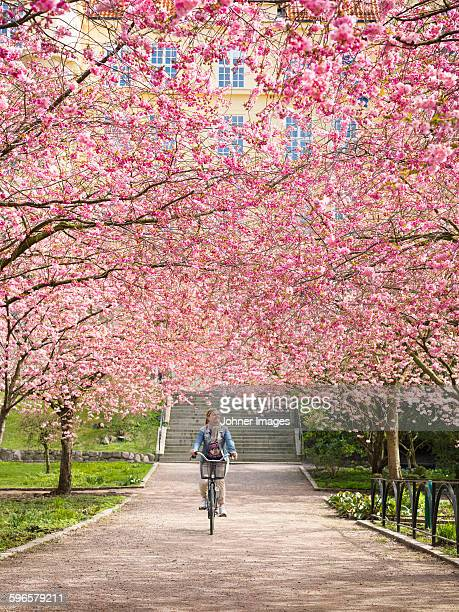 Woman cycling under blossoming trees