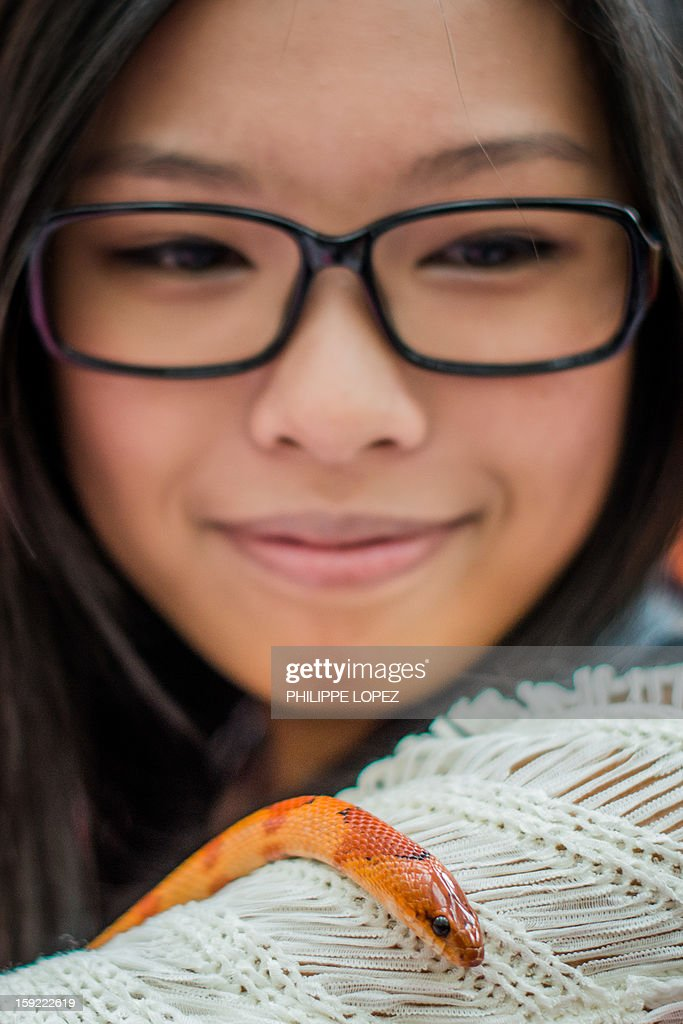 A woman displays her pet on her shoulder, a corn snake, during a snake display to promote responsible breeding and pet ownership in Kong Kong on January 10, 2013. The Chinese new year, often referred to as the 'Lunar New Year', will mark the year of the snake on February 10. AFP PHOTO / Philippe Lopez