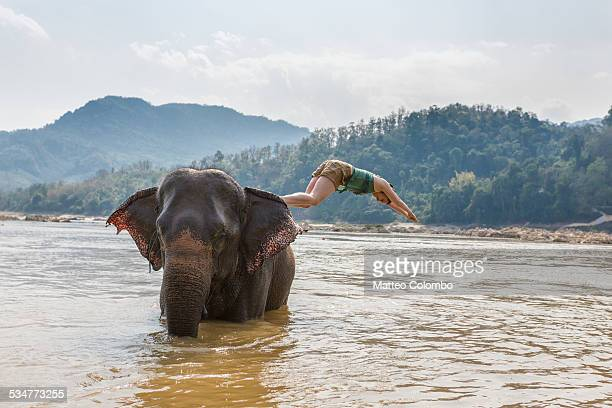 Woman diving from an elephant in the Mekong river