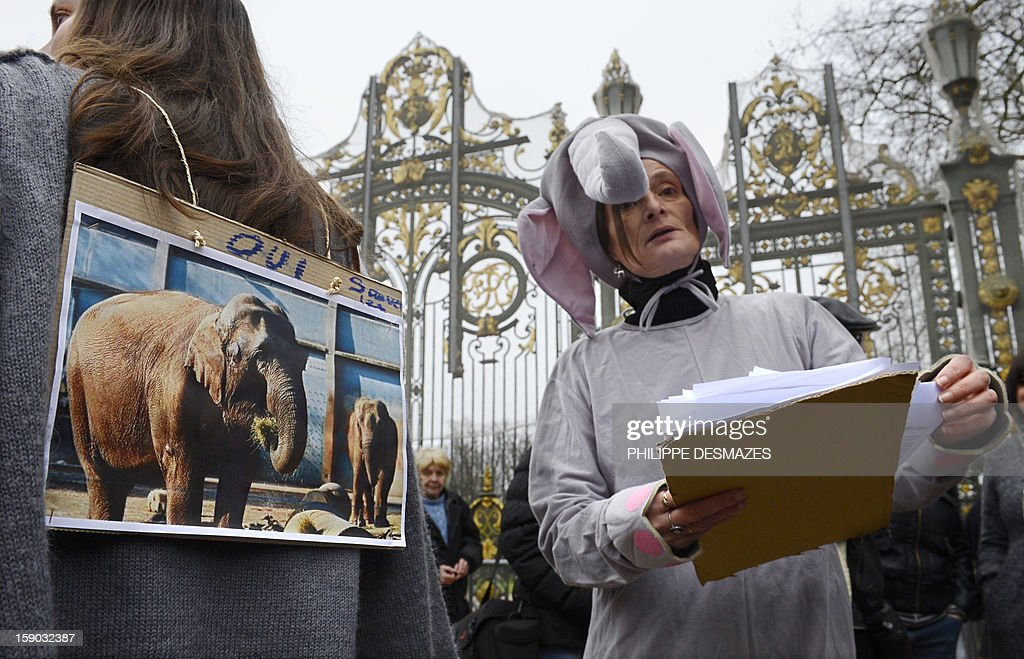 A woman dressed as an elephant holds petitions signed by demonstrators to save Baby and Nepal, two elephants suffering from tuberculosis during a demonstrationon January 6, 2013 at the 'Parc de la Tête d'Or' Zoo in Lyon, central eastern France. The two ailing middle-aged elephants that French officials have wanted put down have been given a Christmas reprieve after an appeal to President Francois Hollande and an Internet campaign to save them. AFP PHOTO/PHILIPPE DESMAZES