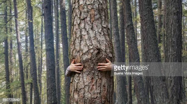 Woman embracing a tree