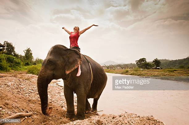Woman enjoys riding elephant as it swims in river in Pai, Northern Thailand, Thailand.