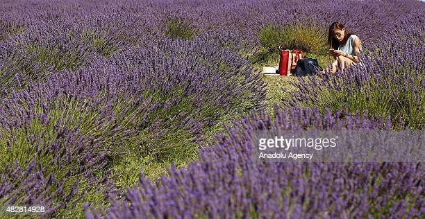 AUGUST 02 A woman enjoys the warm weather at the Mayfield Organic Lavender field enjoy the sunshine on August 2 2015 near Sutton Great Britain The...