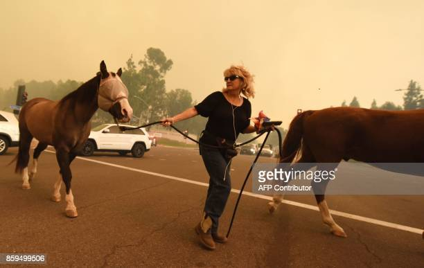 TOPSHOT A woman evacuates horses as strong Santa Ana winds blow fire and smoke from the Canyon 2 Fire toward them on October 9 2017 in Orange...