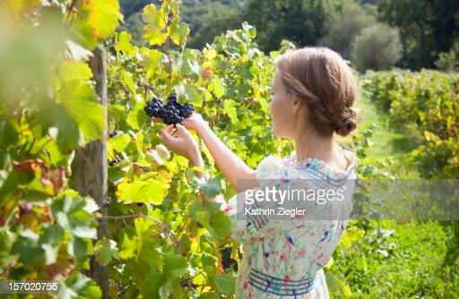 woman examining grapes on vine : Stockfoto