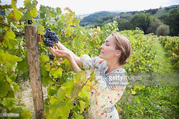 woman examining grapes on vine