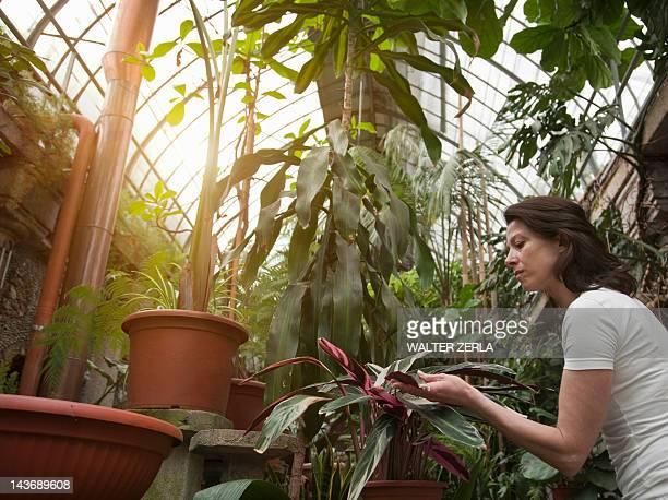 Femme examiner les plantes dans une serre