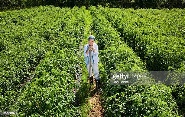 Woman farmer leaning on rake in field of tomatoes