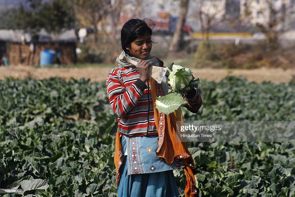 A woman farmer works at a vegetable farm on January 10, 2013 in Noida, India. These farmers took the portion of land for contract from the owner & pay them Rupees 4000 (73.30 USD) for One Bhiga (14400 square feet) per year. They grow different vegetables in their contracted fields & make their living by selling them to the distributors.