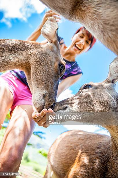 Woman feeding deers