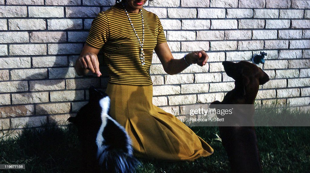 Woman feeding dog and skunk : Stock Photo