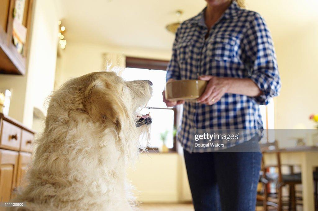 Woman feeding dog. : Stock Photo