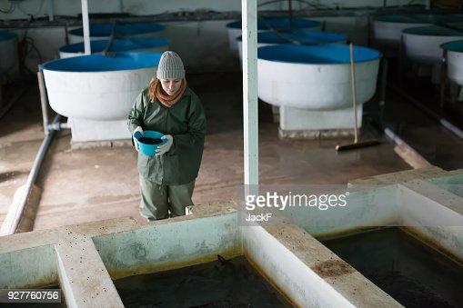 Woman feeding fish in tanks on farm : Stock Photo