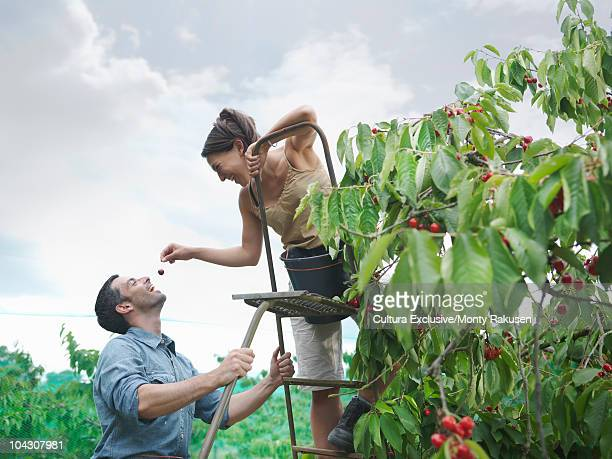 Woman feeding man with cherry in orchard
