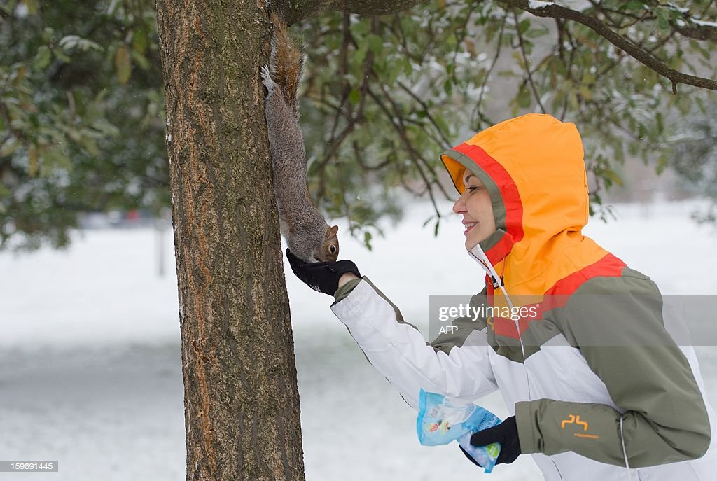 A woman feeds a squirrel in the snow covered St James' Park in central London on January 18, 2013. Snow swept across Britain, forcing airports to cancel hundreds of flights and more than 3,000 schools to close. AFP PHOTO/Leon Neal